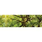 Woodchuck Tree Service logo